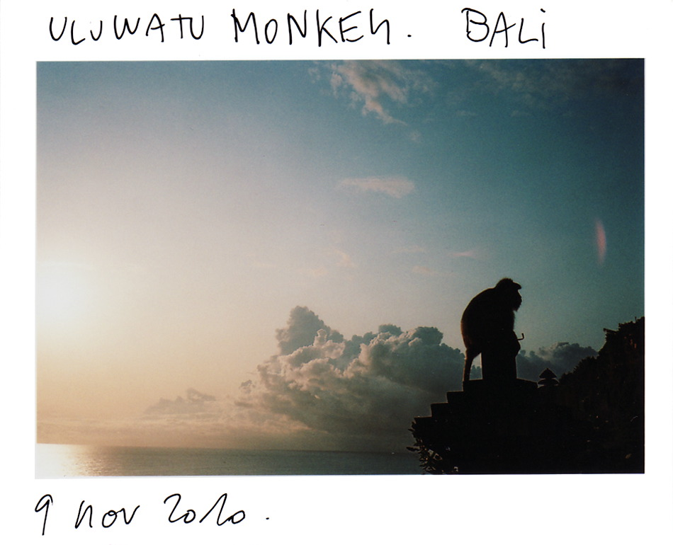 /en/artwork/photography/391/monkey